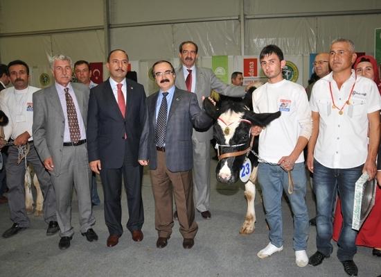 Adana'da 3. Damızlık inek yarışması