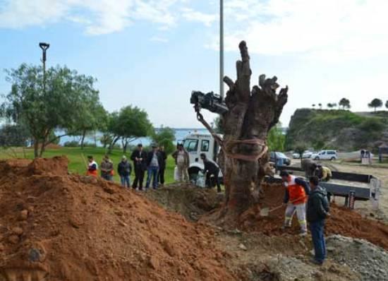 30 ton kaçak orman