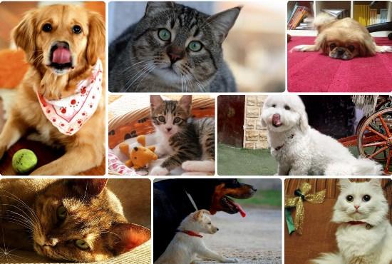 Şampiyonları hayvan dostları belirledi