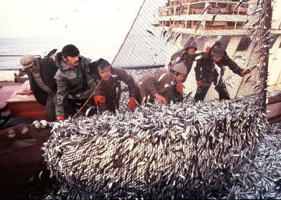 Balık Ağlara takıldı