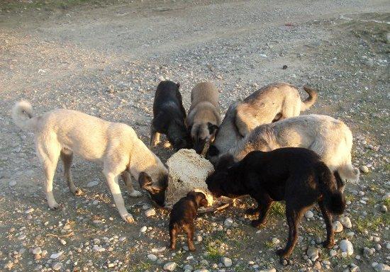 Hayvanları yaşatmak için işbirliği