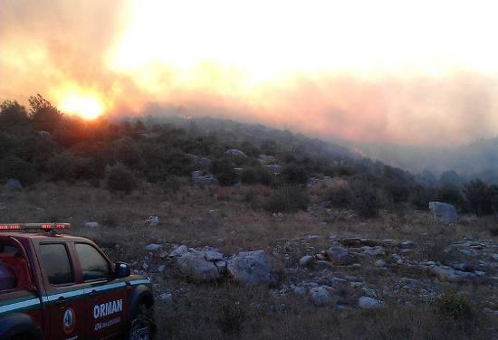 Anız, Ormanları yakıyor