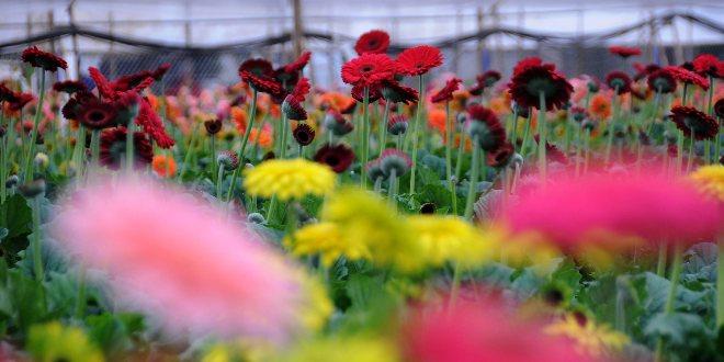 Şehit Annelerine Çiçekler Ücretsiz