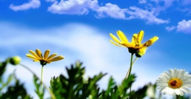bahar_geldi_ilk_cemre_yarin_havaya_dusuyor