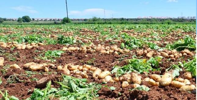 Patates Üreticisine Yumruk, Meclis Gündeminde