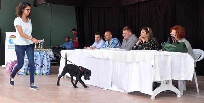 Çukurova'da En Güzel Köpek Yarışması