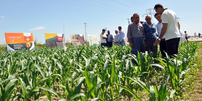 Mısır Çiftçilerinin Buluşması