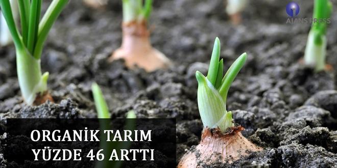 TÜRKİYE'DE ORGANİK TARIM ORANI YÜZDE 1.4